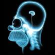 petit_cerveau